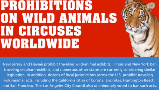 Coalition to Announce State Senate Bill 313 to End Circus Cruelty in California