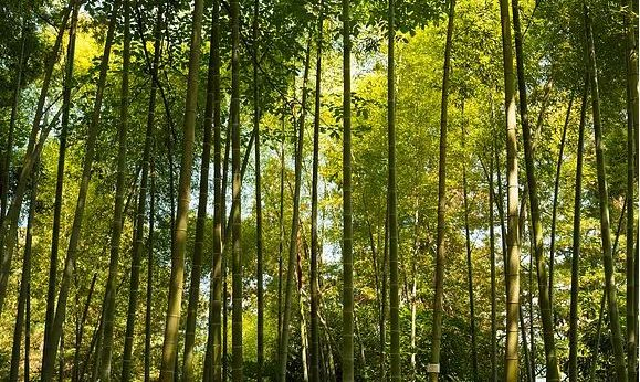 protecting tropical forests