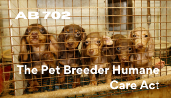 AB 702 - The Pet Breeder Humane Care Act