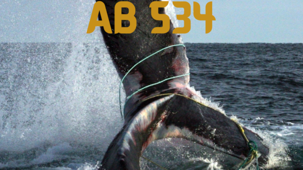 AB 534 to Protect Endangered Sea Life