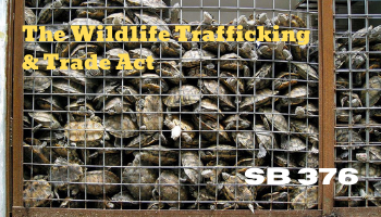 AB 376 (Stern) Wildlife Trafficking and Trade Act