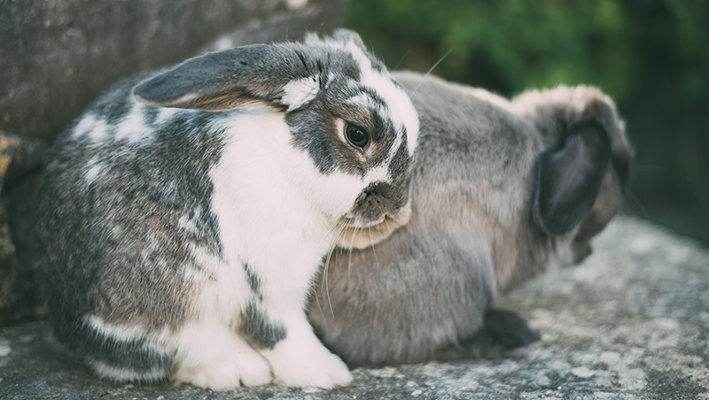 cute-rabbit-outside-with-friend_800px