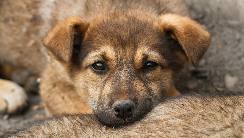 sad-puppy-outside-with-friends_800px