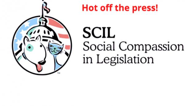 SCIL Updates