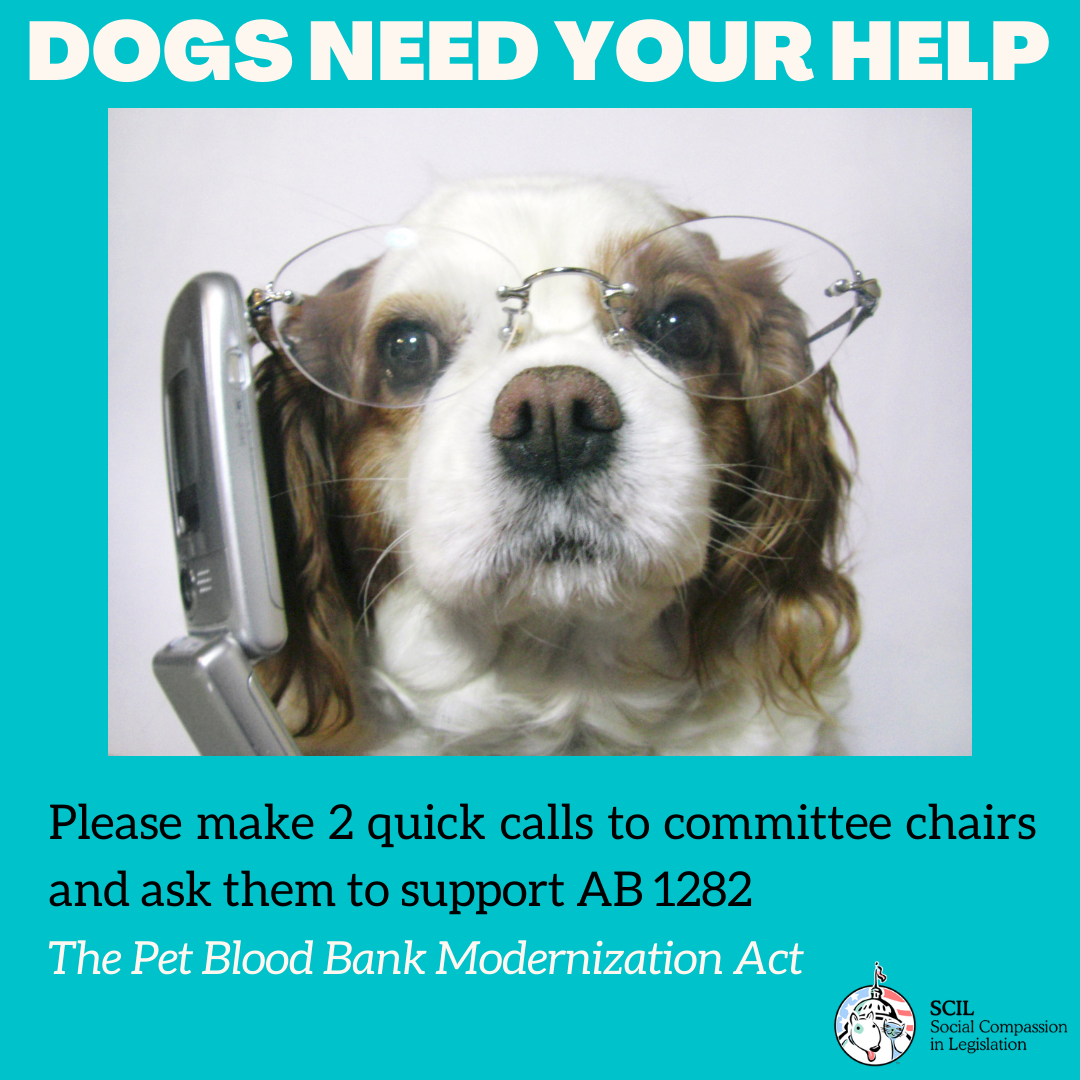 Please make two calls to save dogs