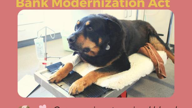 CA Pet Blood Bank