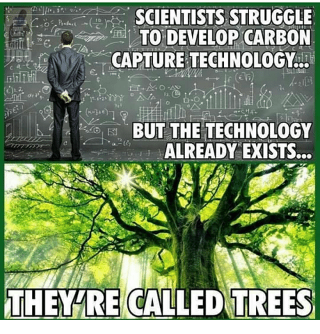 they are called trees
